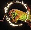 Цирки в Находке